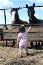 на переправе коней не меняют...