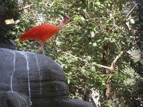 Оранжевая птичка