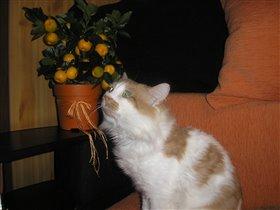 Можно мне хоть одну мандаринку???