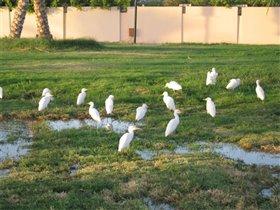 Белые птицы