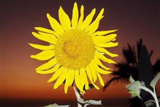 'Солнечный круг'