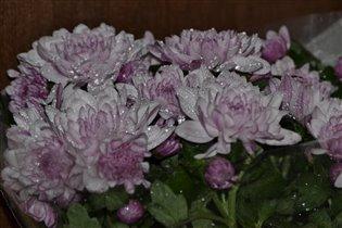 приятно получать цветы не только 8 марта:)