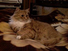 Наш царственный кот