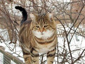 Кот на прогулке.