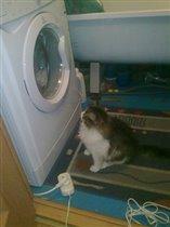 Наш кот Пушок любитель постирать