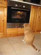 Блиц: С точки зрения кошки - там рыыыыба!