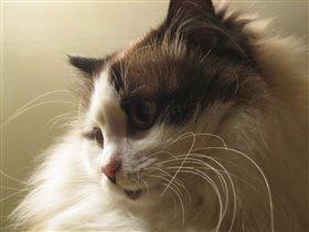 Кошка - это не только ценный мех...
