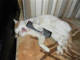 Моя очередь смотреть телевизор!