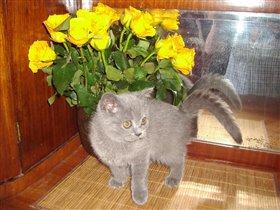 Розы под цвет глаз