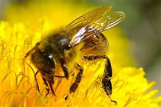 Пробуждение пчелы!