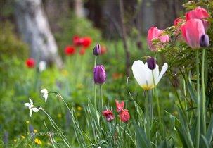 Фото-открытка. Разноцветье. leonidevteev.ru