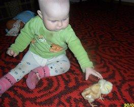 Дашенька 1 год, познает цыплят.
