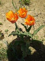 Мои любимые весенние цветы!