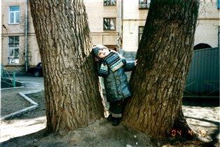 Какие большие деревья!