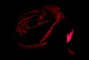 Нас розы нежный аромат манит в мечтательные дали.