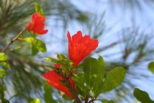 чудное растение)))))