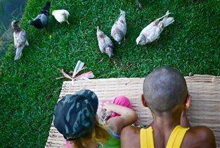 Кормить голубей так приятно!