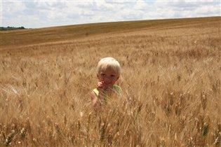 Пшеничное лето