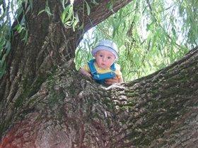 Малиш на дереві підглядає за лебедями