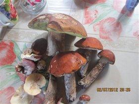 Наш первый урожай грибов..