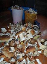 самые вкусные грибы))