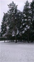 Наш лес.