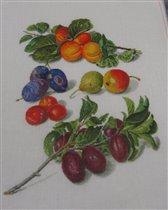 Thea Gouverneur_3062_Fruits_ Peaches & Plums