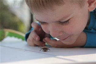 Изучаем майского жука