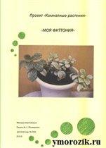 Проект «Комнатные растения» «Фиттония» ymorozik.ru
