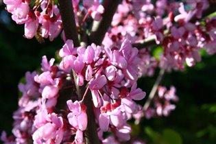 Ботанический сад в мае