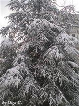 Елочка, елка, лесной аромат