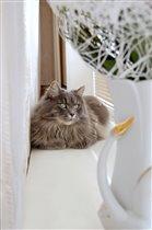 Любимая ваза и любимый кот