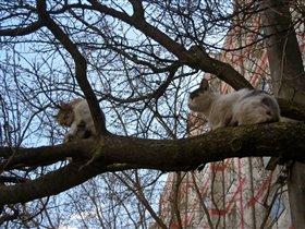 У кошек всегда мартовский период, даже в апреле!