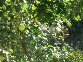 Яблоко из окна