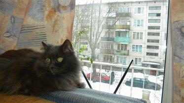 Кошка Василиса