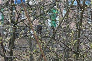 Перелетные птички и первые листочки