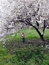 Весна идет! Абрикосы цветут!