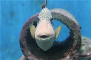 интересная рыба в аквариуме Пхукета