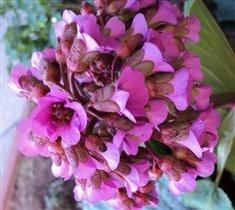 цветочки с нашего дачного участка