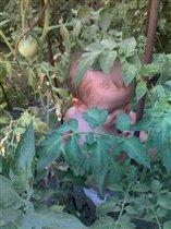в огороде