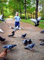 Погоняем голубей