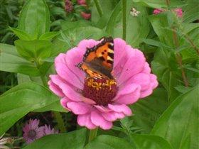 Летний день - он в розовом цвете!