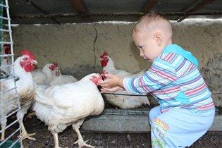 Ванечка кормит курочек