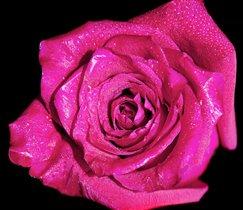 Розовое на чёрном