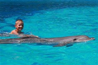 Ну какое море без дельфинов?!