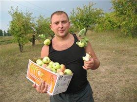 Вот такие яблочки уродились!