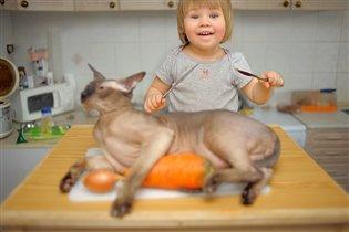 Не любите лысых кошек?