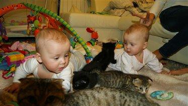 Дети, кошки, ...весело у нас)))