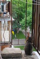 Грыня) Мы на разных берегах... балконах)