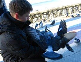 Любовь и голуби